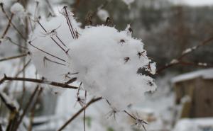 winter_seeds