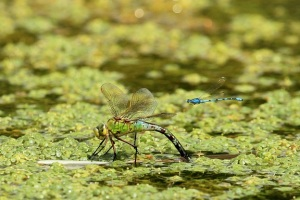 photography_Karen_Antcliffe_insect_5[1]