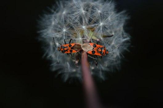 UNDER-18s-GENERAL-WILDIFE_Maddie-Leisham_Fire-bugs-taken-in-Brixham-Devon