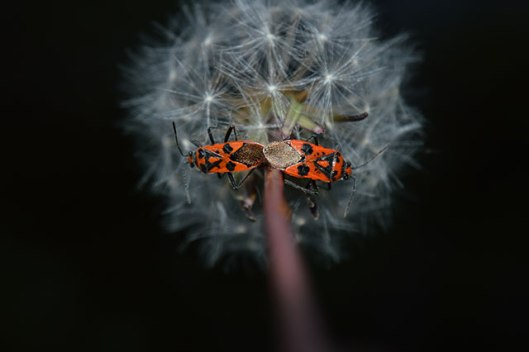 UNDER-18s-GENERAL-WILDIFE_Maddie-Leisham_Fire-bugs-taken-in-Brixham-Devon