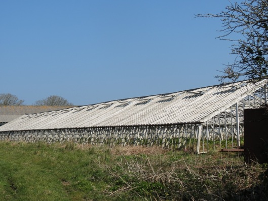 guernsey_greenhouse